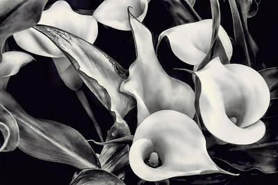 Photograph - Black And White Calla Lilies by Donna Proctor