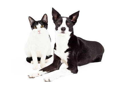 Black And White Cat And Dog Art Print by Susan Schmitz