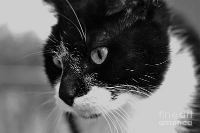 Photograph - Black And White Cat In Black And White by Photography by Tiwago