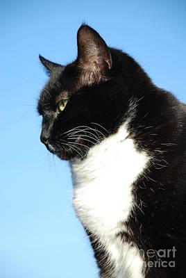 Photograph - Black And White Cat Portrait by David Fowler