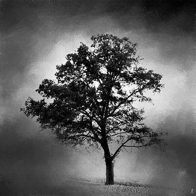 Photograph - Black And White Cotton Field Tree by Jai Johnson