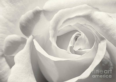 Photograph - Black And White Curves by Sabrina L Ryan