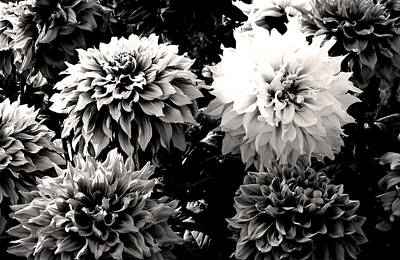 Photograph - Black And White Dahlia Bunch by Sumit Mehndiratta