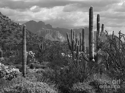 Photograph - Black And White Desert by Marilyn Smith