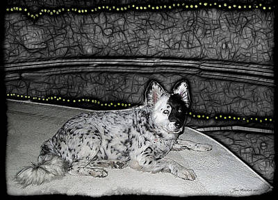 Digital Art - Black And White Dog by Joan  Minchak