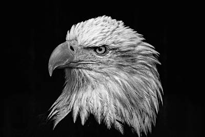 Photograph - Black And White Eagle D2687 by Wes and Dotty Weber