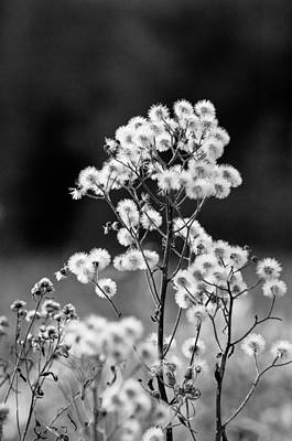 Wall Art - Photograph - Black And White Field Flowers by Scott Hafer