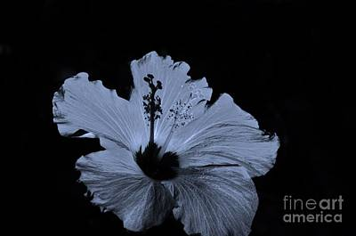 Photograph - Black And White Floral by Bob Sample