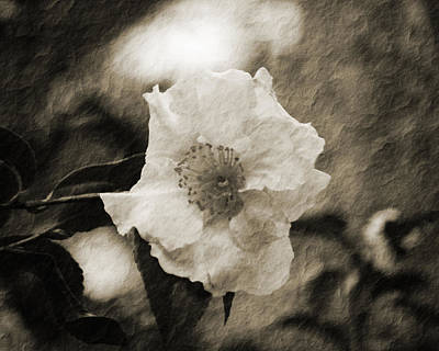 Black And White Flower With Texture Art Print