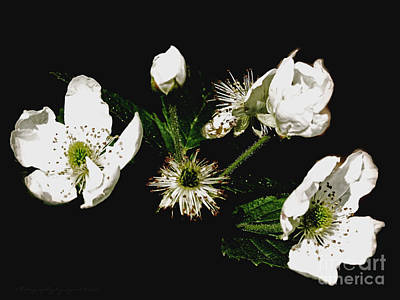 Photograph - Black And White Flowers by Gena Weiser