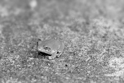 Black And White Frogger Art Print