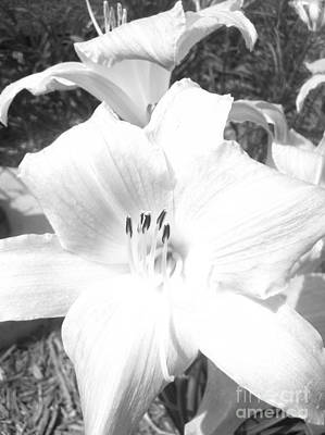 Art Print featuring the photograph Black And White Hibiscus  By Saribelle Rodriguez by Saribelle Rodriguez