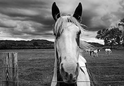Black And White Horse Art Print by Steven  Michael