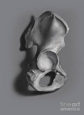 Human Joint Digital Art - Black And White Illustration Of An Os by Nicholas Mayeux