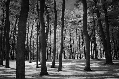 Negative Space - Black and White Infrared Photograph inside a Pine Tree Grove by Randall Nyhof