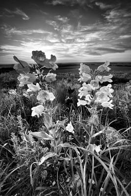 Photograph - Black And White Kansas Susnet by Scott Bean