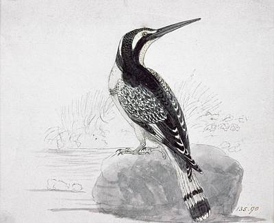Kingfisher Drawing - Black And White Kingfisher by Thomas Bewick