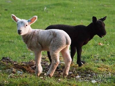 Black And White Lambs Art Print by Elizabeth Debenham