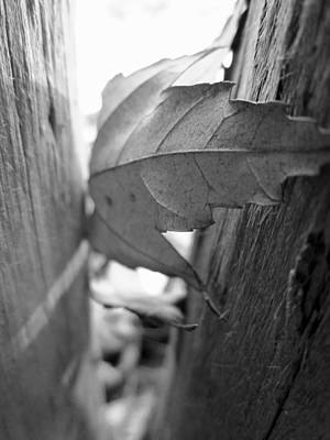 Black And White Leaf At Fort Watauga Art Print