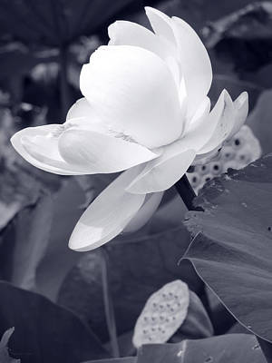 Photograph - Black And White Lotus by Shawna Rowe