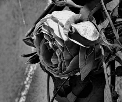 Photograph - Black And White Monochrome Pink Rose In Half Profile by Leif Sohlman