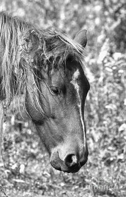 Photograph - Black And White Ocracoke Wild Pony by Adam Jewell