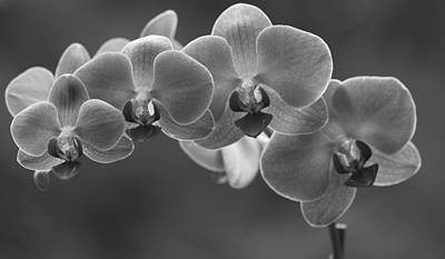 Photograph - Black And White Orchid by Dan Sproul