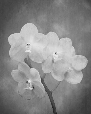 Photograph - Black And White Orchid by Rudy Umans