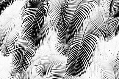 Black And White Palm Fronds Art Print