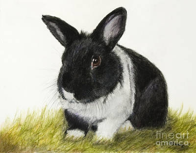 Painting - Black And White Pet Rabbit by Kate Sumners