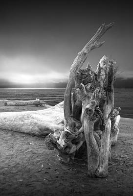 Photograph - Black And White Photograph Of Driftwood On The Beach by Randall Nyhof
