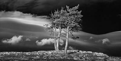 Photograph - Black And White Photograph Trees On A Rocky Ridge At Glacier National Park by Randall Nyhof