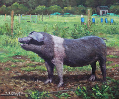 Painting - Black And White Pig On Farm by Martin Davey