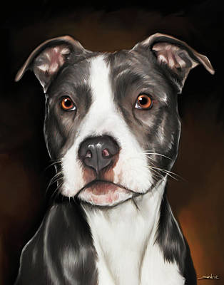 Black And White Pit Bull Terrier Art Print