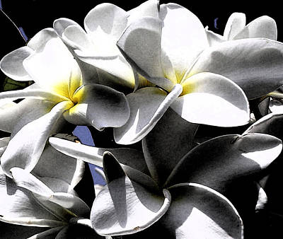 Black And White Plumeria Art Print by Karen Nicholson
