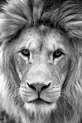 Animal Photograph - Black And White Portrait Of A Lion by Jaroslav Frank