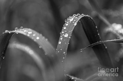 Photograph - Black And White Rain by Cheryl Baxter