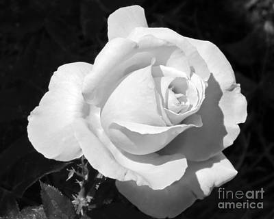 Photograph - Black And White Rose by Chris Anderson