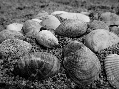 Black And White Seashells Art Print