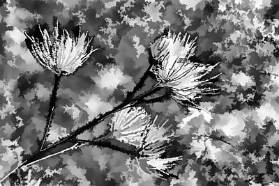 Photograph - Black And White Seeds by Scott Campbell