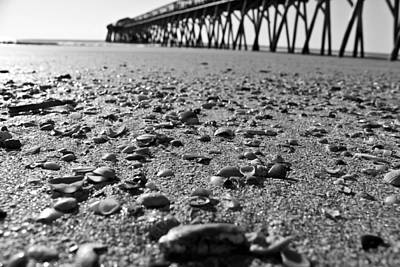 Photograph - Black And White Shells by Jessica Brown