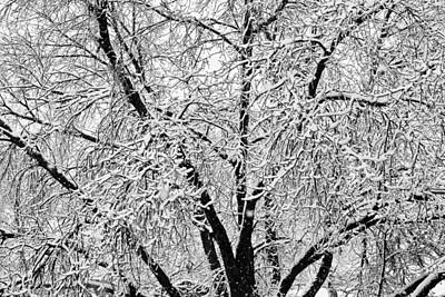 Seasons Photograph - Black And White Snowy Tree Branches Abstract 2 by James BO  Insogna