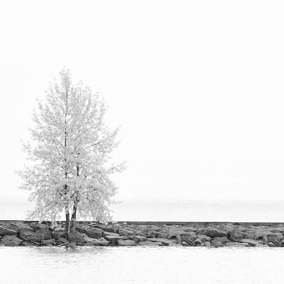 Photograph - Black And White Square Diptych Tree 12-7693 Set 2 Of 2 by Ulrich Schade