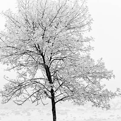 Photograph - Black And White Square Tree  by U Schade