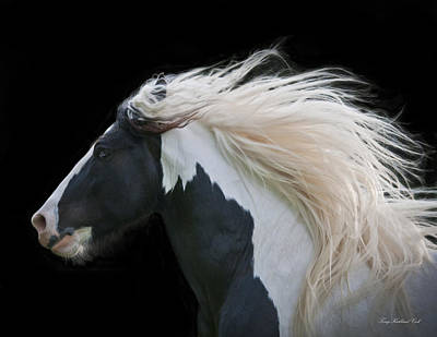 Gypsy Vanner Horse Photograph - Black And White Study IIi by Terry Kirkland Cook