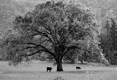Photograph - Black And White Tree With Two Cows by Michele Avanti