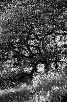 Photograph - Black And White Trees by Deprise Brescia