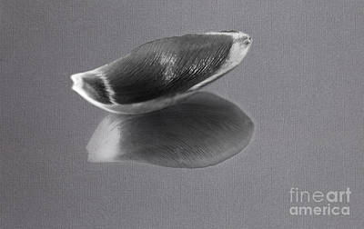 Balck Art Photograph - Black And White Tulip Petal by Eden Baed