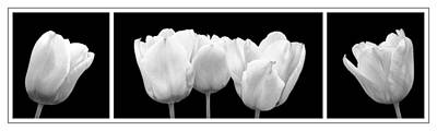 Photograph - Black And White Tulip Triptych by Gill Billington