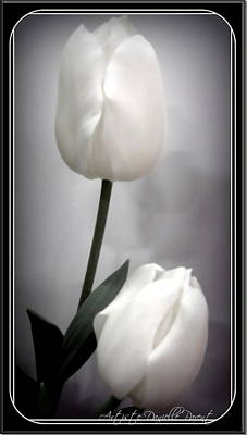 Black And White Tulips  Art Print by Danielle  Parent